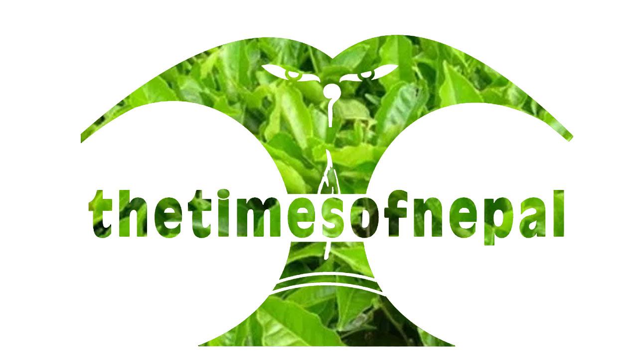 tea - the times of nepal