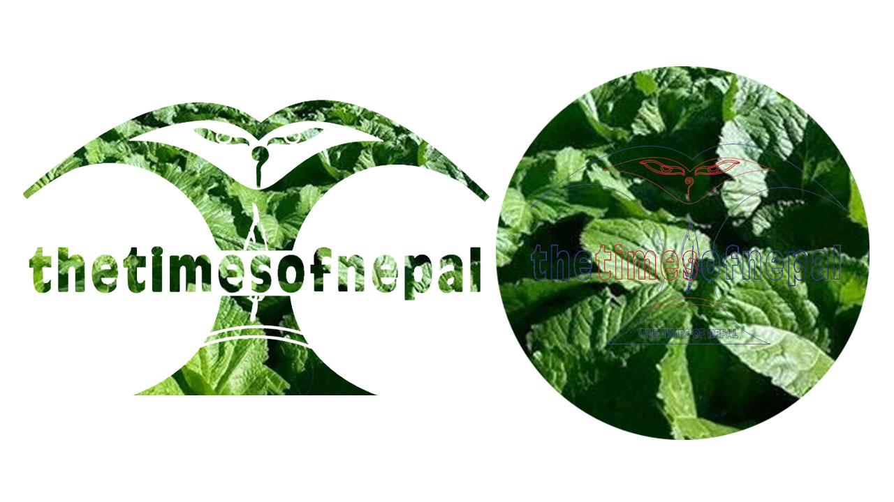 तरकारी खेती, Vegetable farming, - The Times Of Nepa