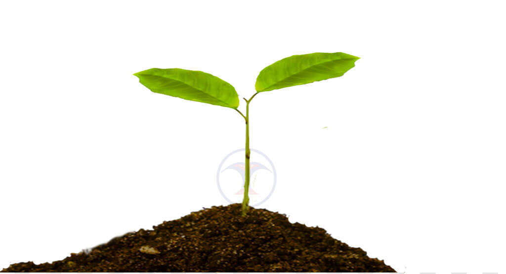 ढकेरी वनस्पति उद्यानमा सर्पगन्धा, कुचिला, श्रीखण्ड, सिकाकाई, अपामार्ग, बोझो, बेल, अमला, कुरिलो, बेतलौरी, आँख, राजवृक्ष, कालोमुस्ली, तेजपात, सितलचिनी, सोनटाटा, हर्रो, बर्रो, सिन्दुर, अनन्तमूल, गुडमार, सिमलतरुल, विजयसाल, सतिसाल, अर्जुन, गुर्जो, कालमेघ, छतिवन, पीपलालगायत ४०० दुर्लभ प्रजातिका वनस्पति संरक्षण गरिएको छ ।,world environment day, tree, world environment day tree plantation