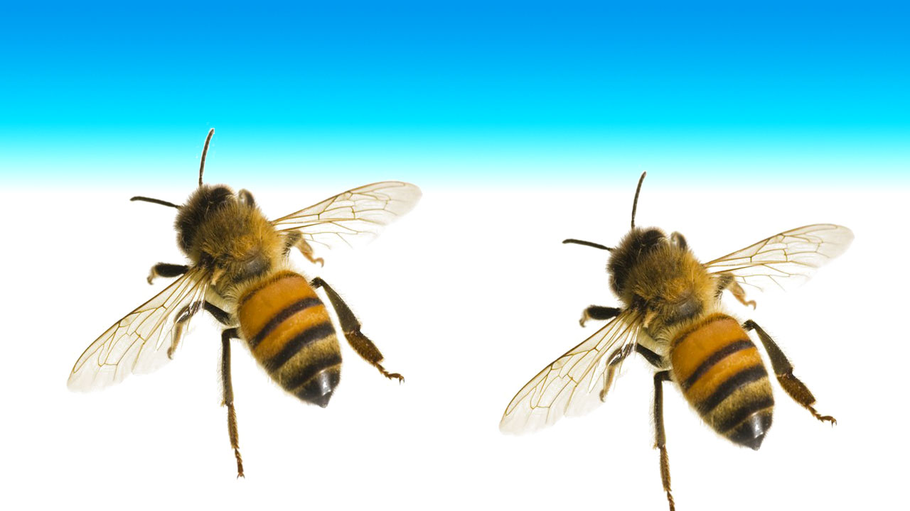 Honey, bee, माहुरी, मह - the times of nepal