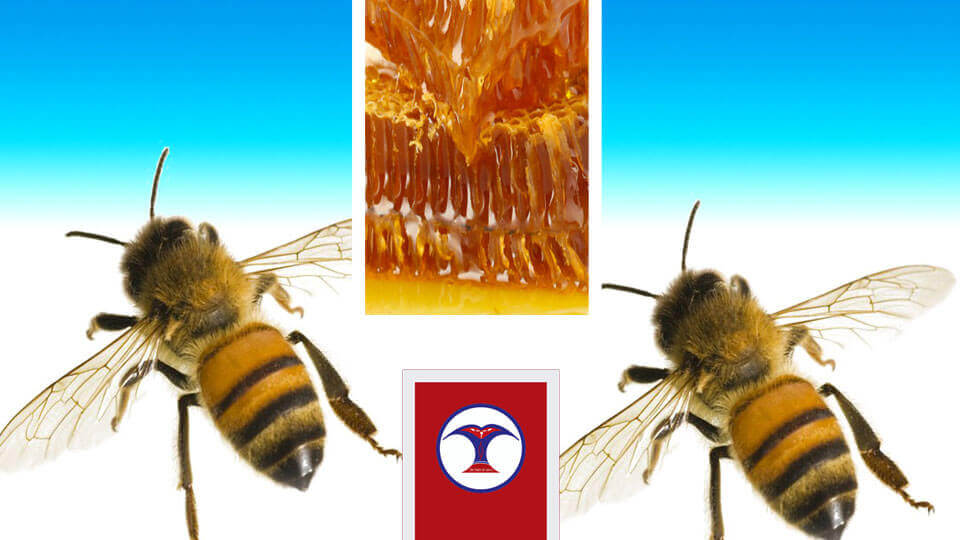 Honey, Bee - The Times Of Nepal