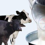 cow milk -The Times Of Nepal